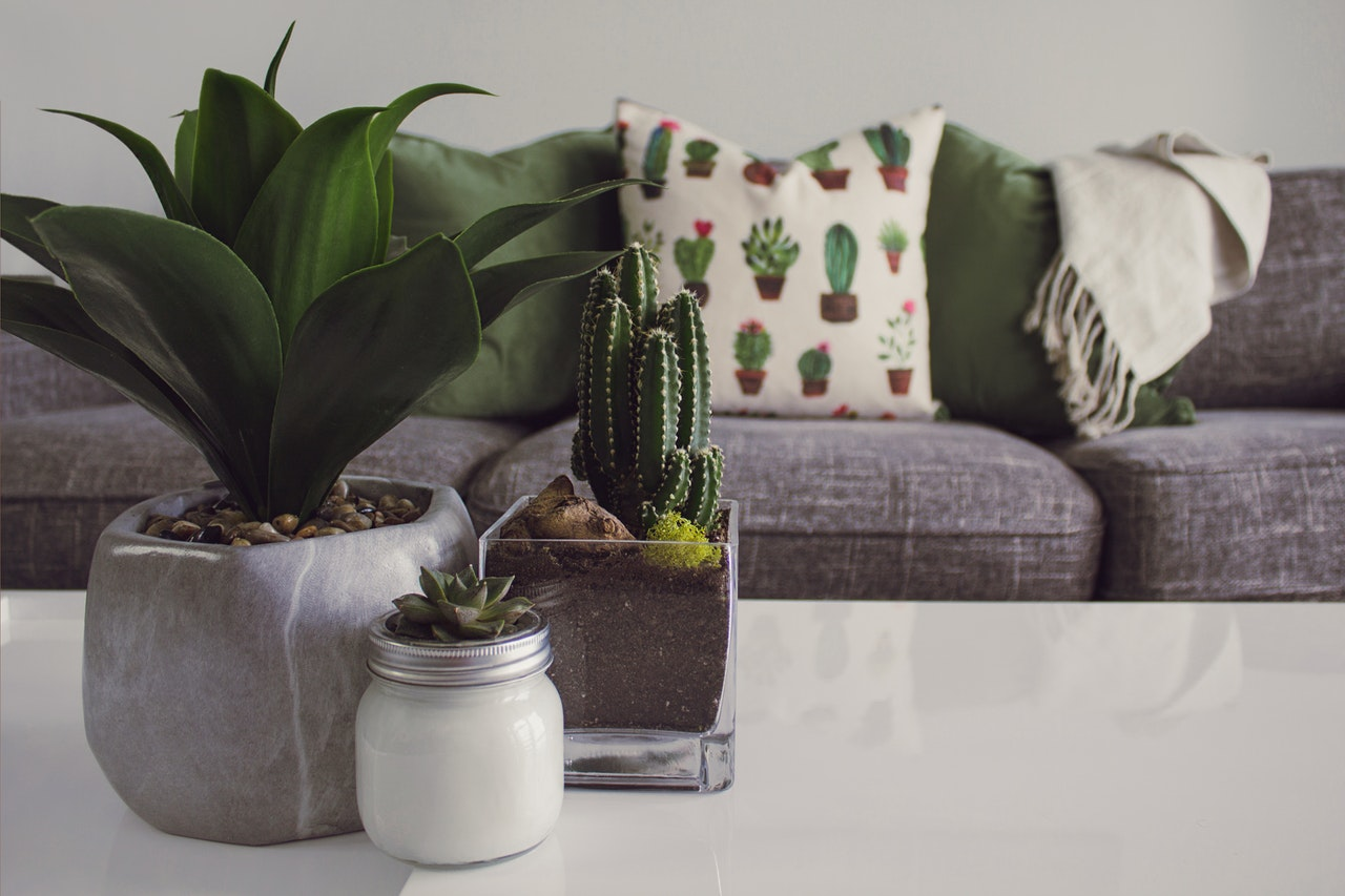 Stilet bolig med planter og kaktusser