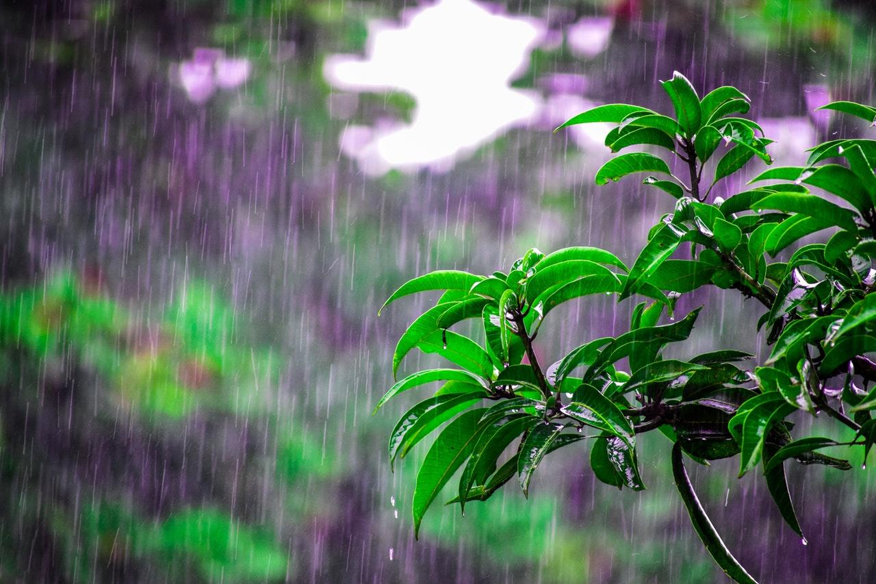 Regn på træ i baghave