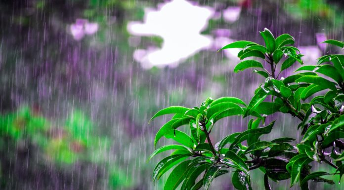 regnvand